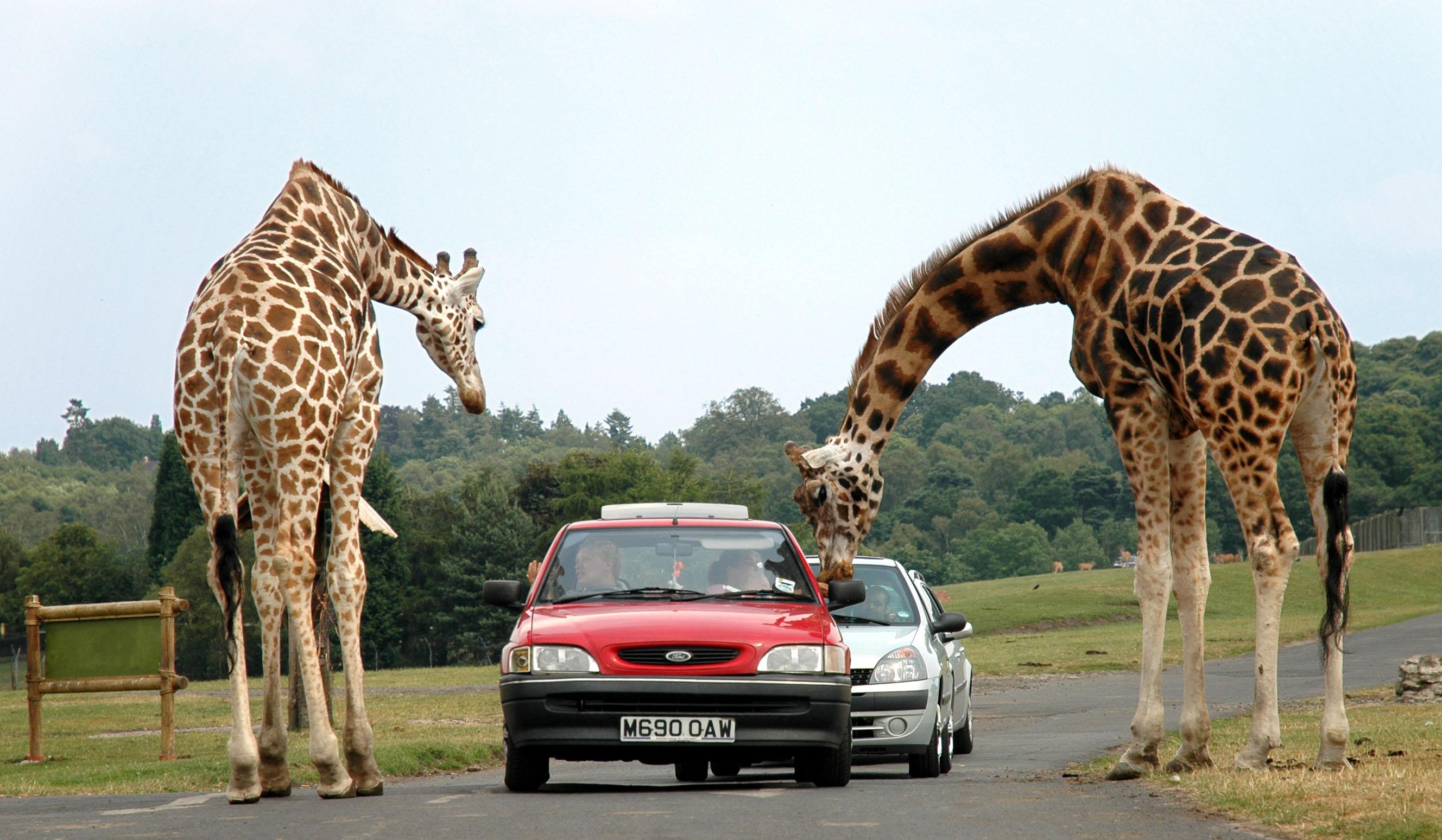 Découvrir l'âme de la Tanzanie avec safarivo.com