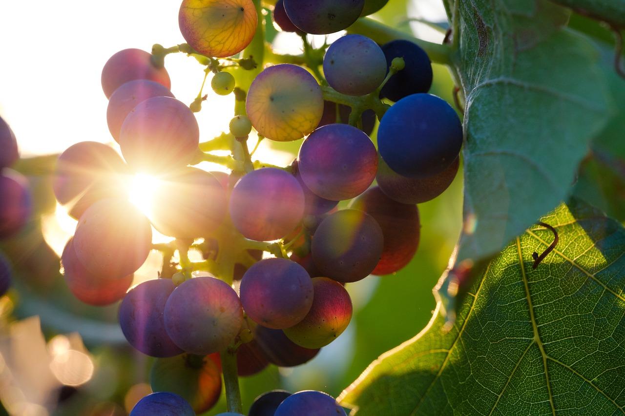 Un domaine reconnu pour la qualité de ses vins